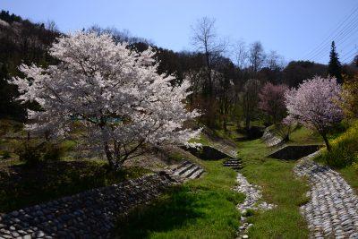 春の光城山と陸郷